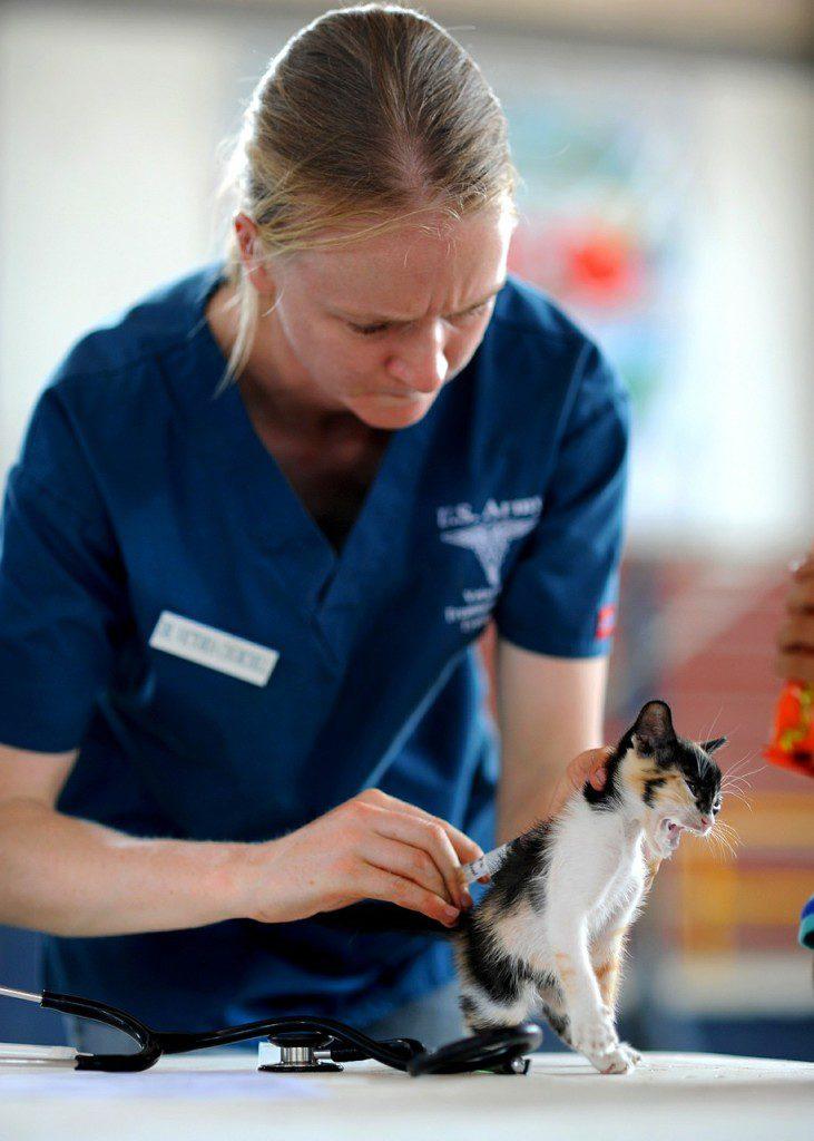 Beruf Tierheilpraktiker und die Tierheilpraktiker Ausbildung